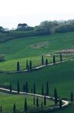 cypress tuscany royaltyfria bilder
