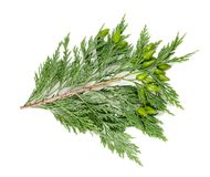 Cypress Stock Photo