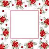 Cypress vine Flower on Christmas White Banner Card. Vector Illustration.  royalty free illustration