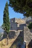 Cypress y ciudadela vieja de Kotor Imagenes de archivo