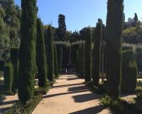 Cypressar i Jardins de Laribal Barcelona royaltyfri foto
