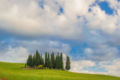 Cypressar på en kulle i en sommardag Arkivbild