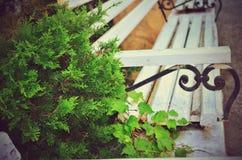 Cypressbänk på bakgrunden Arkivfoto