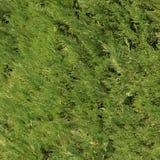Cypressbarnvisare Royaltyfri Fotografi