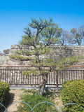 Cypressbonsaiträd i parkera Arkivfoto