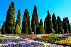 Cypressdalen av botaniska trädgården royaltyfri foto