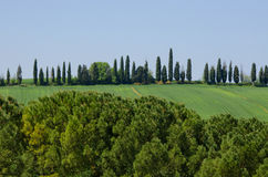 Cypressen och sörjer landskap i Tuscany, Italien Arkivbilder