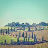cypresses Foto de Stock