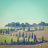 cypresses arkivfoto
