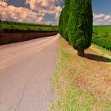 cypresses fotografering för bildbyråer
