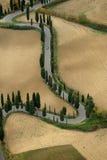 cypresses royaltyfri bild