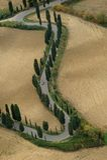 cypresses royaltyfri fotografi