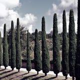 cypresses royaltyfria foton