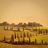 cypresses royaltyfri foto