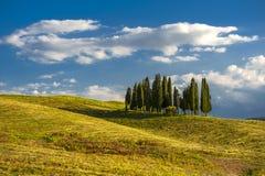 cypresses royaltyfria bilder