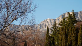 Cypresses against the backdrop of the rocky mountains stock footage