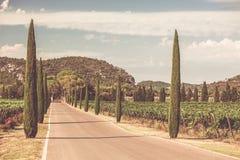 Cypresses alley through vineyards Stock Photo