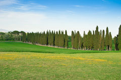 Cypresses avenue Royalty Free Stock Photography