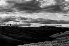 Cypresses and big sky. Some  cypresses on top of a hill, under a big sky with white clouds Royalty Free Stock Images