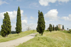 Cypresses and castle Stock Images