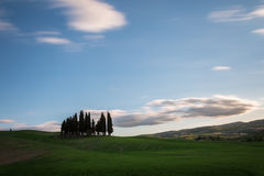 Cypresses and clouds. An isolated group of cypresses, on a green hill, under fast moving white clouds on blue sky Royalty Free Stock Photos