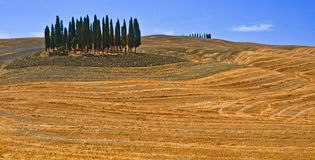 cypresses D-orciaquirico san Crete Senesi Toscana Arkivfoto