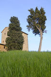 Cypresses in green field Royalty Free Stock Photos