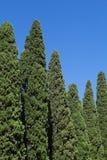 Cypresses Stock Photos