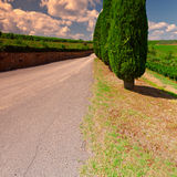 Cypresses Stock Image