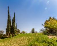 Cypresses in Kibbutz Sde Boker, Israel. Cypresses on a hill in Kibbutz Sde Boker in the Negev desert, Israel Stock Images