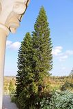Cypresses near Latrun Trappist Monastery in Israel. Middle East, Asia Stock Photography