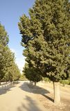 Cypresses path Royalty Free Stock Photos