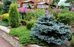 Cypresses plants royalty free stock photos