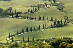 Cypresses and roads of Tuscany. Cypresses along a curving road in Tuscany near Al Foce Stock Photo
