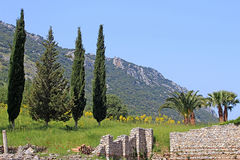 Cypresses and ruins in Ephesus, Turkey Royalty Free Stock Photography