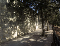 Cypresses and shadows on the wall Stock Photography