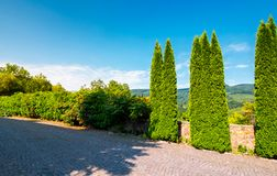 Cypresses Trees By The Wall In Pawed Yard Stock Photo