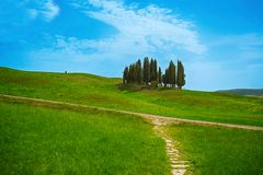 Cypresses trees on Tuscany hills, Siena province, Italy. royalty free stock image