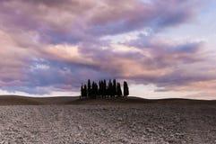cypresses tuscan arkivbild