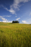 cypresses tuscany Arkivfoto