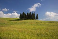 cypresses tuscany Royaltyfri Fotografi