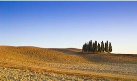 cypresses tuscany royaltyfri foto