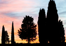 Cypresses of Tuscany against sunset sky Royalty Free Stock Photos
