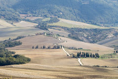 Cypresses in Tuscany, italian landscape Stock Images
