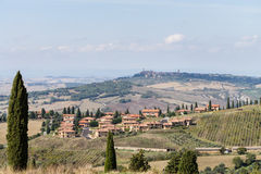 Cypresses in Tuscany, italian landscape Royalty Free Stock Photo