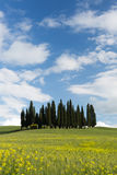 Cypresses in Tuscany Stock Photography