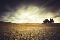 cypresses in Val D'Orcia Royalty Free Stock Photos
