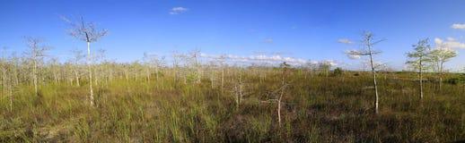 cypresseverglades landscape panorama royaltyfri foto