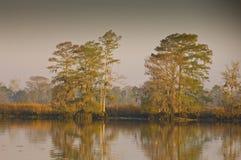 cypressflodwaccamaw arkivfoto