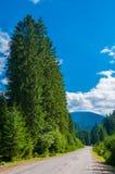 Cypressgränd längs vägen som leder till bergen arkivfoton